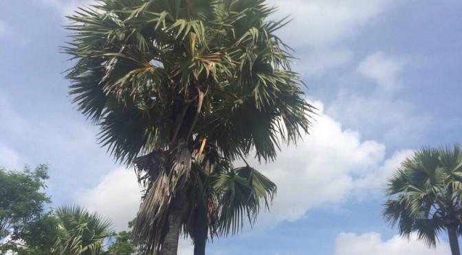 ヤシの木(タン・ピン)